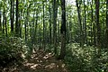 Forest in Mt.Bandai 11.jpg