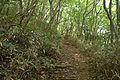 Forest in Mt.Tsukuba 01.jpg