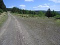 Forest road - geograph.org.uk - 1291469.jpg