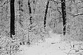Forest road Slavne 2017 BW G5.jpg