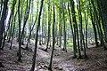 Foresta della Maiella - panoramio.jpg