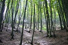 Foreste sulla Maiella
