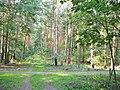 Forst Grunewald - Waldwegkreuzung (Woodland Path Crossing) - geo.hlipp.de - 41351.jpg