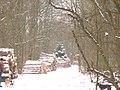 Forstwirtschaft im Grunewald (Forestry in Grunewald) - geo.hlipp.de - 33024.jpg
