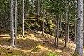 Frauenstein Nussberg Gauerstall bemooste Felsformation 21042020 8834.jpg