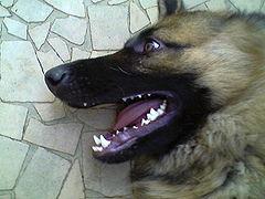 a kutya maximális fogyása 2 havonta