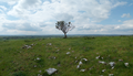 Freestone Hill with Hawthorne tree.png