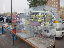 Friday Market in Dammam 01.JPG