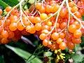 FruitsNear Kandol Lake Kalam Pakistan.JPG