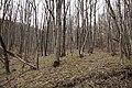 G. Goryachiy Klyuch, Krasnodarskiy kray, Russia - panoramio (5).jpg