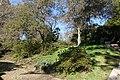 Garden Serralves (1).jpg