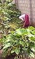 Garden weeding.jpg
