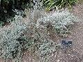 Gardenology-IMG 4964 hunt10mar.jpg