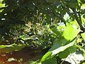 Gardenology.org-IMG 0455 rbgs10dec.jpg