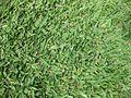 Gardenology.org-IMG 1956 rbgs11jan.jpg