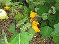 Gardenology.org-IMG 7329 qsbg11mar.jpg