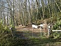 Gate to hillside woodland - geograph.org.uk - 613496.jpg