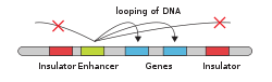 Gene enhancer.svg