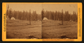 General view of the Mammoth Grove and Hotel, Calaveras County, by Lawrence & Houseworth.png