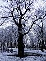 Glogow, Poland - panoramio (41).jpg