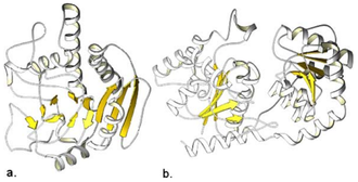 Glycosyltransferase - Most glycosyltransferase enzymes form one of two folds: GT-A or GT-B