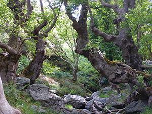 Fondachelli-Fantina - The Giants' Gorge of the Patrì creek in Fondachelli-Fantina.