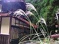 Goso, Taga, Inukami District, Shiga Prefecture 522-0311, Japan - panoramio.jpg