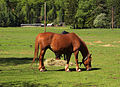 Gozd Martuljek - horse.jpg