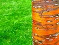 Grass candy... - Flickr - Biscarotte.jpg
