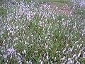 Grass fields at Islamic university kushtia - 15.jpg