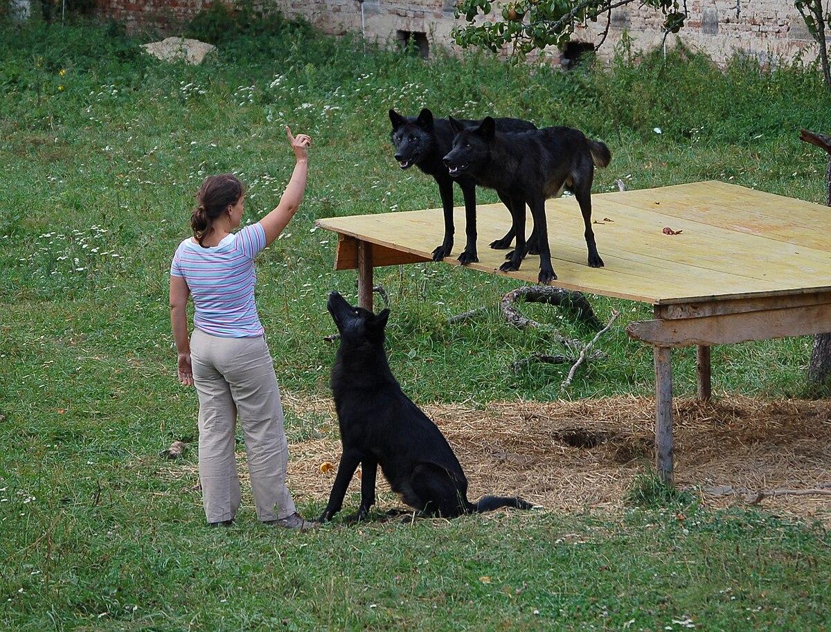 کدام حیوان رام نمی شود