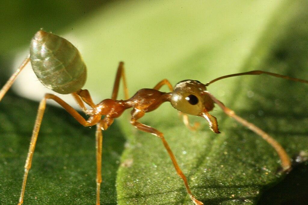Ученые: Глобальное потепление ухудшает репродуктивные функции насекомых
