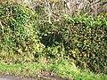 Greenacre Ruins, Llanteg - geograph.org.uk - 1042782.jpg