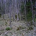 Grindelwald - panoramio (7).jpg