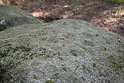 Großsteingrab Bollbrücke Schälchen auf Deckstein.JPG