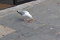Gull and rat, Whitechapel 1.jpg