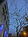 HK 九龍塘 Kln Tong 達之路 Tat Chee Avenue 創意中心 InnoCentre evening tree view blue sky Mar-2014.JPG