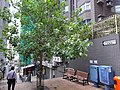 HK 西營盤 Sai Ying Pun 第三街 Third Street Sheung Fung Lane tree Aug 2016 DSC.jpg