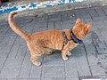 HK 觀塘 Kwun Tong 偉業街 Wai Yip Street brown cat evening June 2019 SSG 01.jpg