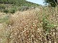 Hadassah Trail P1150441.JPG