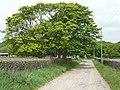 Harden Moss Road, Upperthong - geograph.org.uk - 1340068.jpg