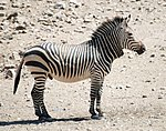 Hartmann zebra hobatere S.jpg