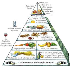 Harvard food pyramid