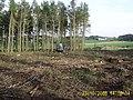 Harvesting Timber - geograph.org.uk - 265884.jpg