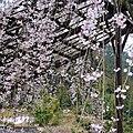 Hasedera Temple 長谷寺 - panoramio (13).jpg