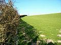 Hedge - geograph.org.uk - 399347.jpg