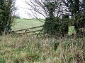 Hedge and gate near West Knoyle - geograph.org.uk - 1584193.jpg