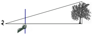 Forest inventory - Figure demonstrating the ocular trigonometric principles behind the Biltmore stick.