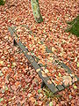 Herbst-ebw-4.jpg