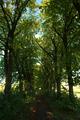 Herbstein Allee Wanderweg.png